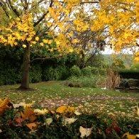 AutumnLeaves2.JPG.jpg