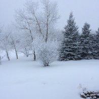 2019_01_18 fresh snow on Hardy's Hill
