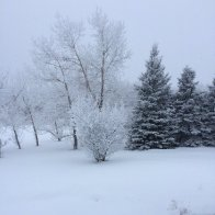 2019_01_18 fresh snow on Hardy's Hill.JPG