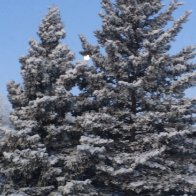 2019_12_14 moon behind spruce tree