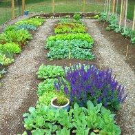 My vegetable garden june2010