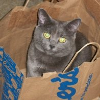 Smokey in a bag