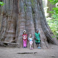 underneath a giant sequoia
