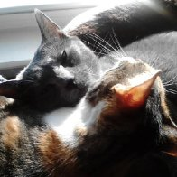 Beebe n Dolly in the sun