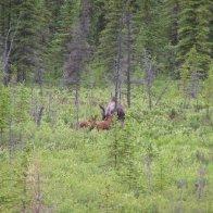 Alaska Trip 205