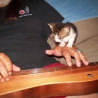 Hazards of playing around Kittens