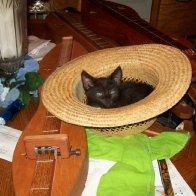 Blackie has a nest