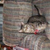 Sadie the Christmas Cat