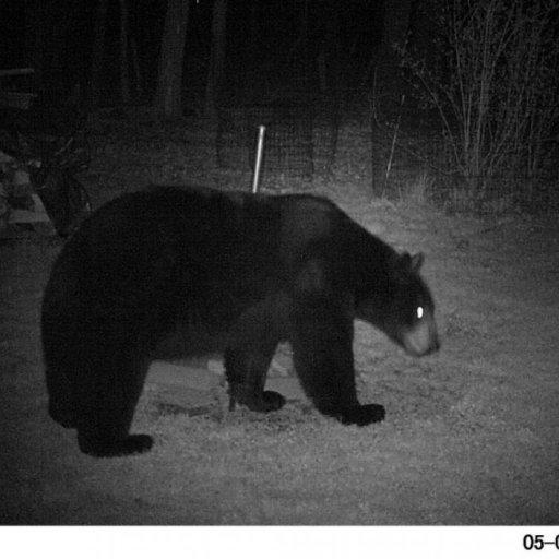 bear 05082014