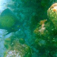 Snorkeling.JPG.jpg