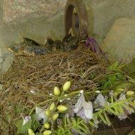 baby birds 1.jpg