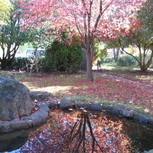 The Pond at Tasma House