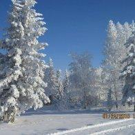 Hoar frost Jan 24 2016
