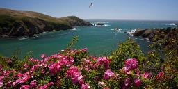 California Dulcimer Dreamin'