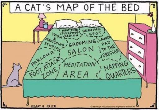catmap.jpg