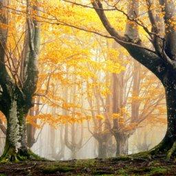 Green Stubble Fields Of Autumn (Coinleach Glas An Fhómhair)